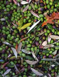 not-your-run-of-the-mill-olive-oil-tour