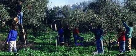 andalusia-conference-on-the-future-of-traditional-olive-oil-production