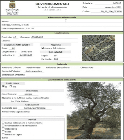 mapping-puglias-ancient-olives-puglia-monumental-olive--database-entry