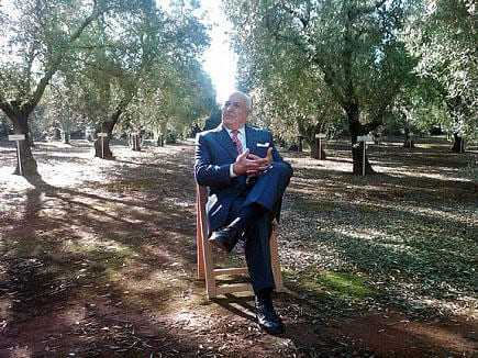 a-pact-to-protect-the-andalusian-olive-grove