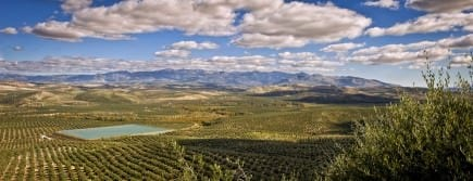 extrascape-great-olive-oil-begins-with-a-landscape
