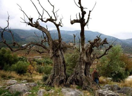 spains-olive-tree-municipalities-announce-culture-award-winners