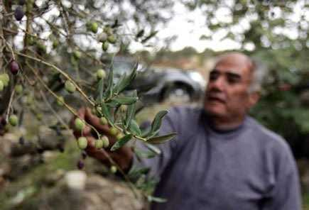 Producers in Lebanon Benefit from Reduced Syrian Imports | Olive Oil Times