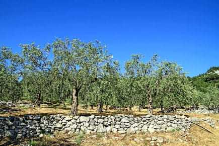 greeks-seek-aid-for-olive-crop-disaster-olive-oil-times-greeks-seek-aid-for-olive-crop-disaster