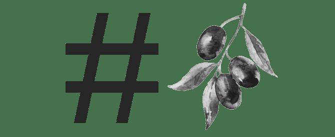 raccolta delle olive-ottiene-sociale-in-italy-olio d'oliva-volte-raccolta delle olive-va-sociali