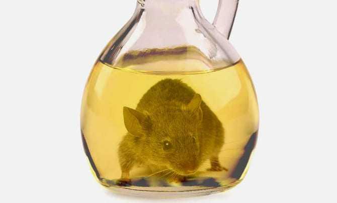 cruet-speroni-nuovo-push-per-ban-topo-in-olio di oliva-ampolla-speroni-nuovo-push-per-ban topo-in-olio d'oliva,
