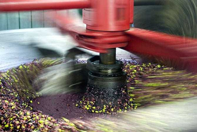 world-olive-oil-production-predicted-to-top-32-million-tons
