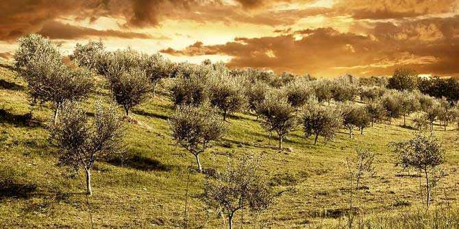 ispanya-üretir-8700-ton-in-ilk-ay-of-the new-zeytin yağı sezon-zeytinyağı-kat-ispanya-üretir-8700-ton-in-ilk-ayın-of-the new-zeytin yağ sezon