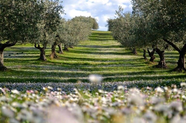 San-Martino-to-host-üçüncü baskısı-of-the extrascape-zeytinyağı-kat-a-kazanan-zeytinyağı-manzara-extrascape-is-de-bir-fotografik-yarışma