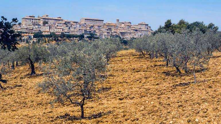 umbrian-leaders-seek-action-for-huge-damages-to-regions-growers