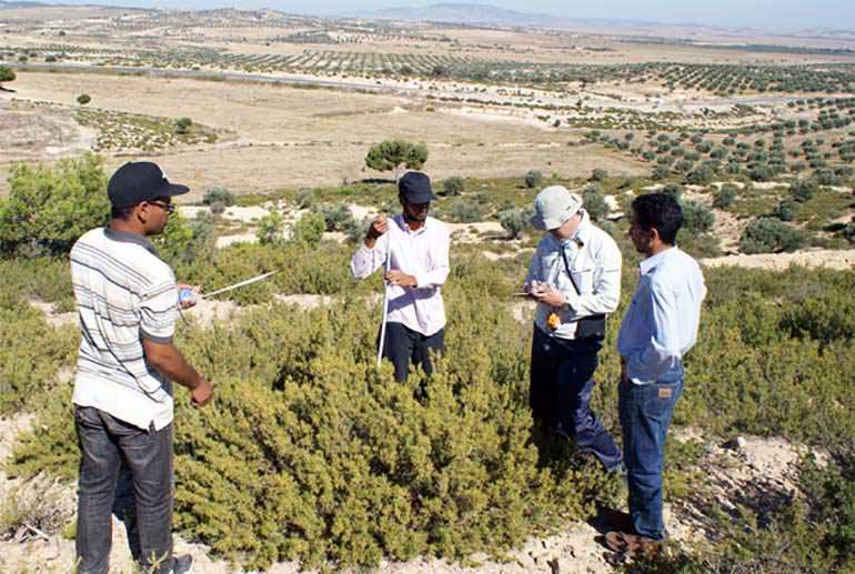 tunisian-olive-sector-benefits-from-japanese-cooperation-project
