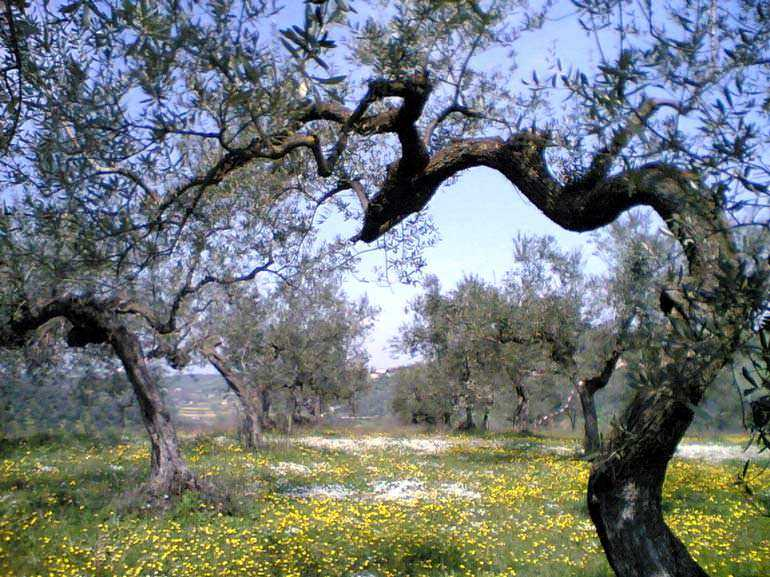 at-expo-2015-one-olive-oil-producers-commitment-to-sustainability