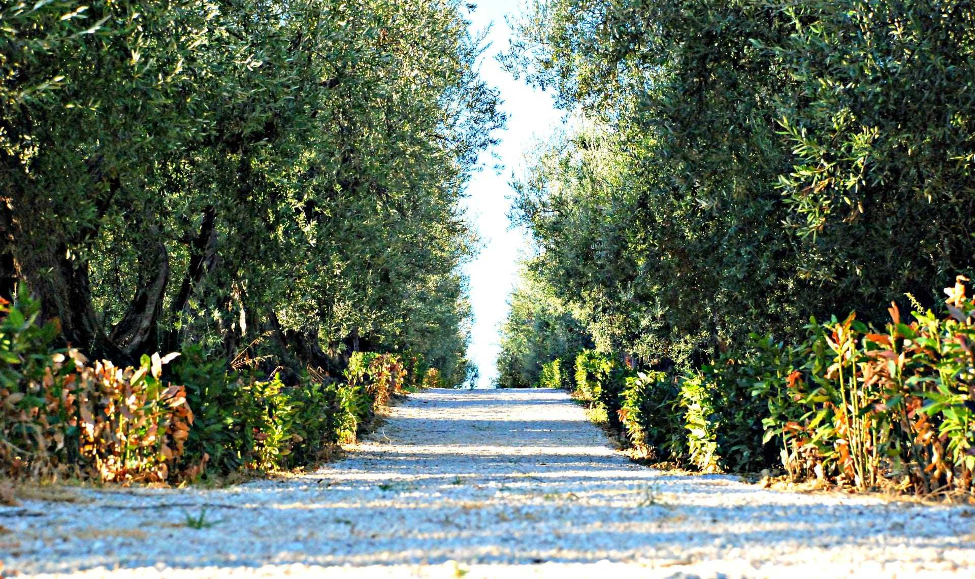 a-gold-standard-farm-in-umbria-promotes-research-on-sustainability-and-health