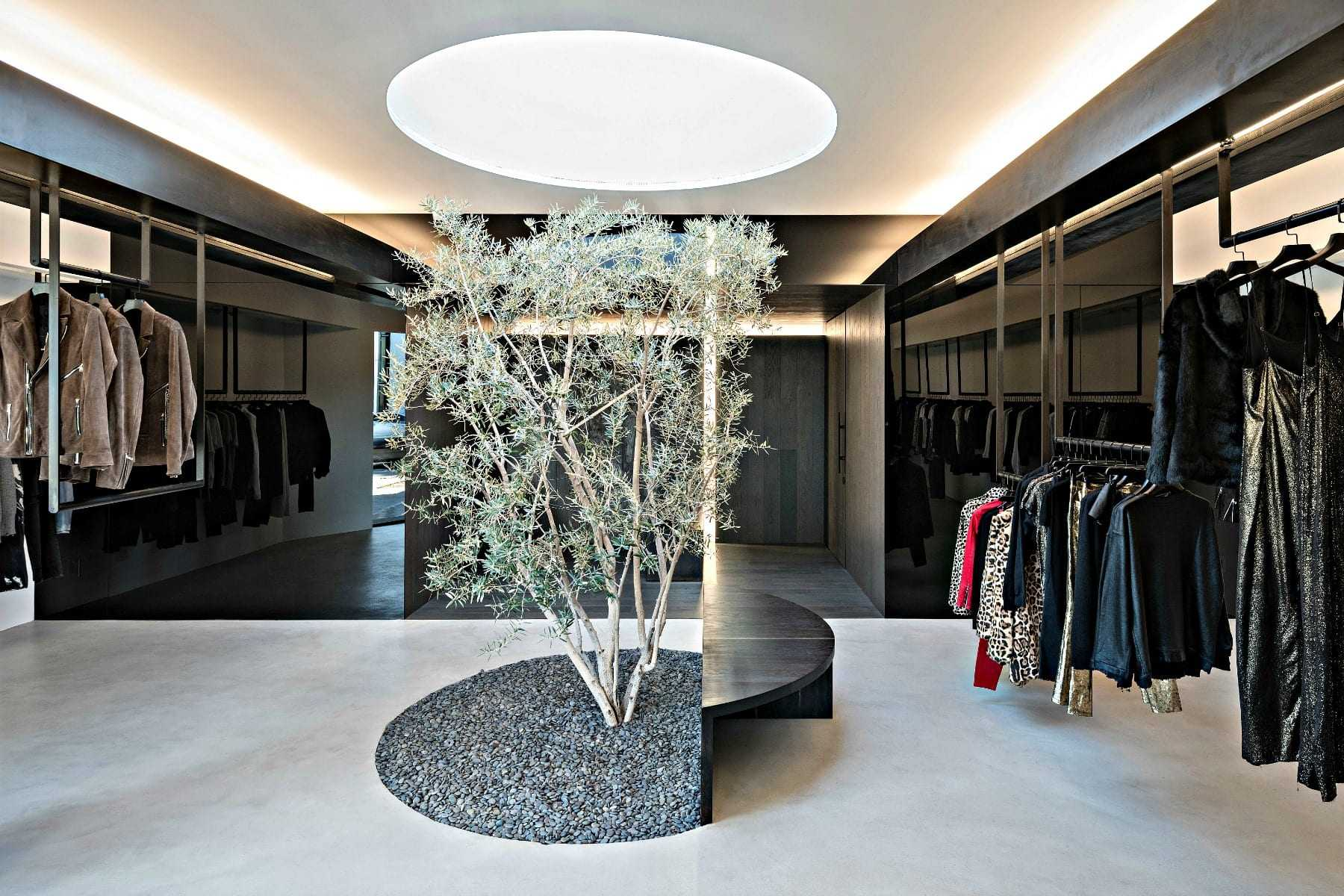 an-olive-tree-takes-center-stage-in-la-boutique
