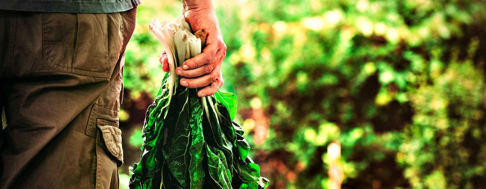 Agreement Reached on New EU Organic Food Rules