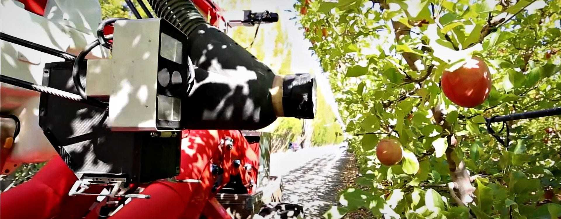 Robotic Olive Harvesters Might Be on the Horizon