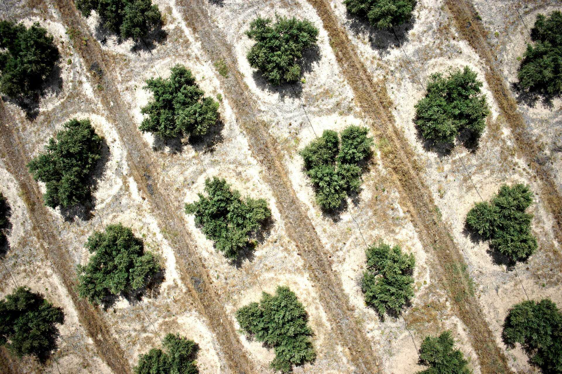 drones-carry-spanish-producers-into-the-next-era-of-olive-farming
