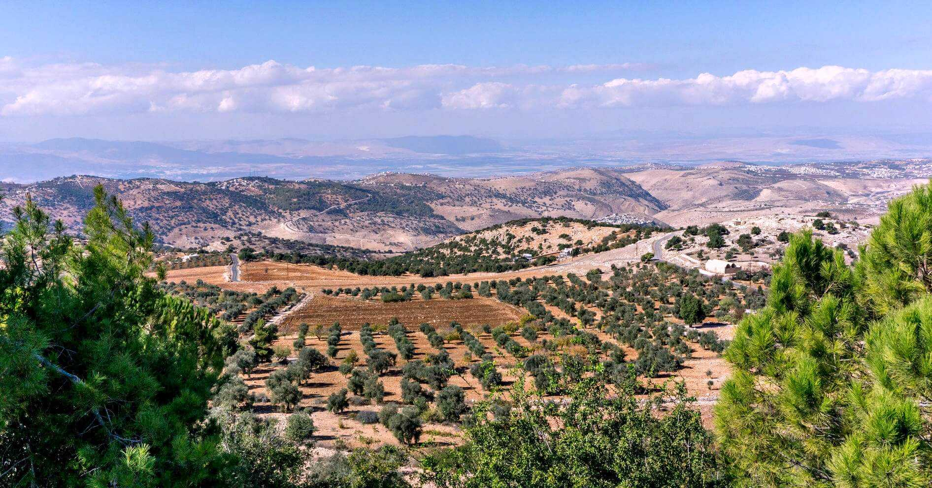 olive-tourism-in-jordan