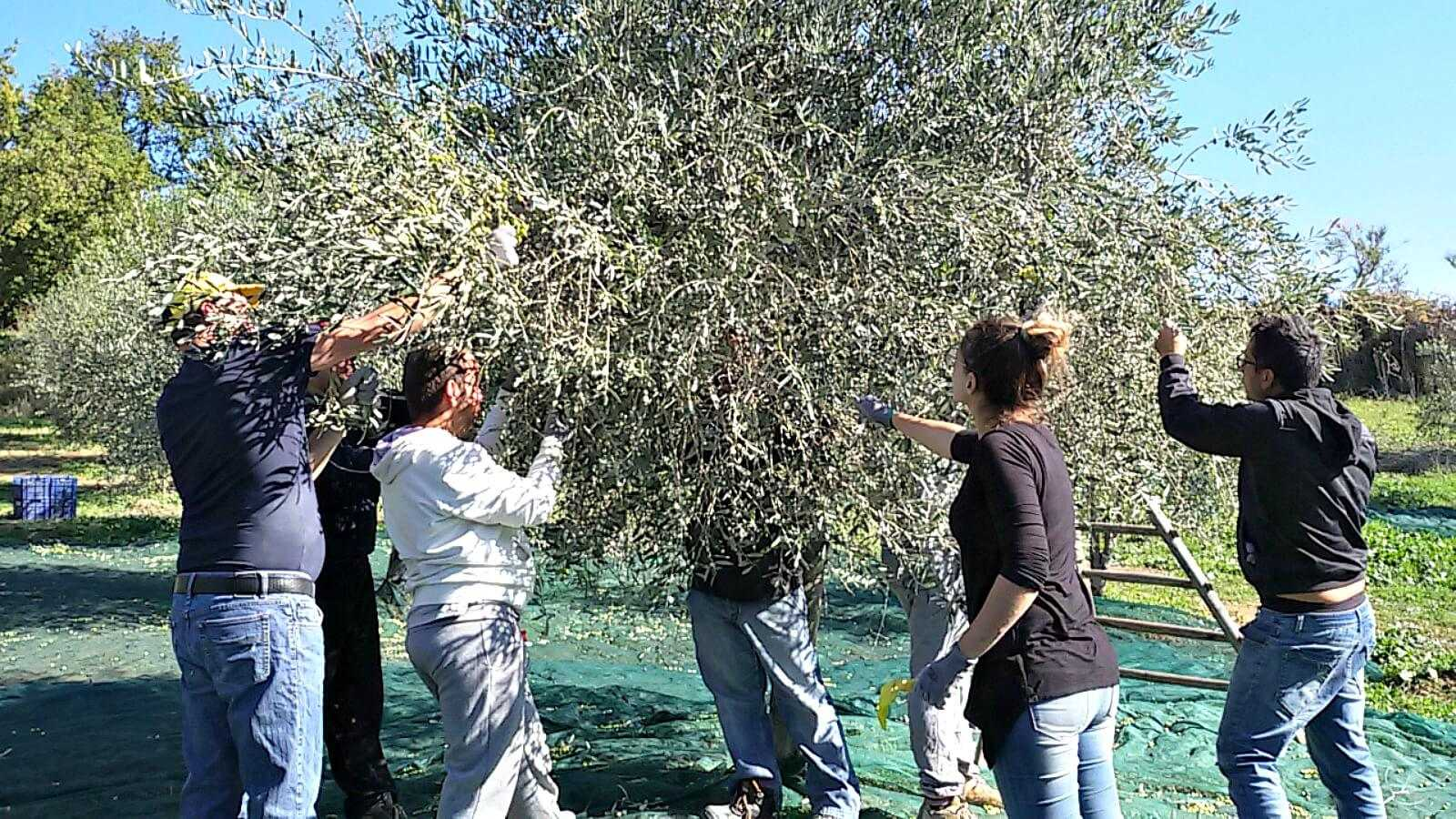 quality-evoo-production-at-the-heart-of-italys-social-farming