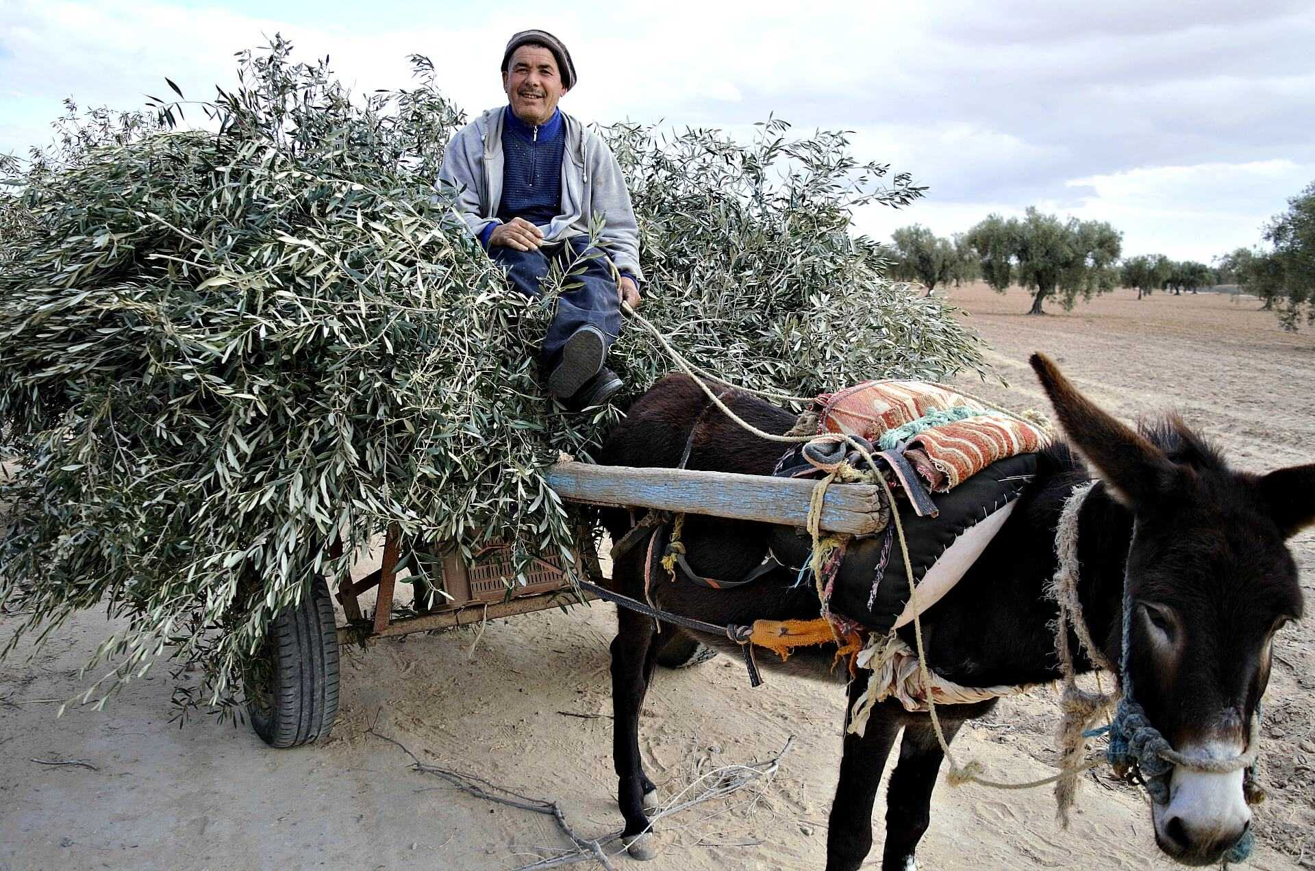 tunisia-land-of-the-olive-tree