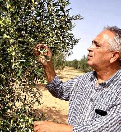 a-record-number-of-awards-for-tunisian-olive-oil