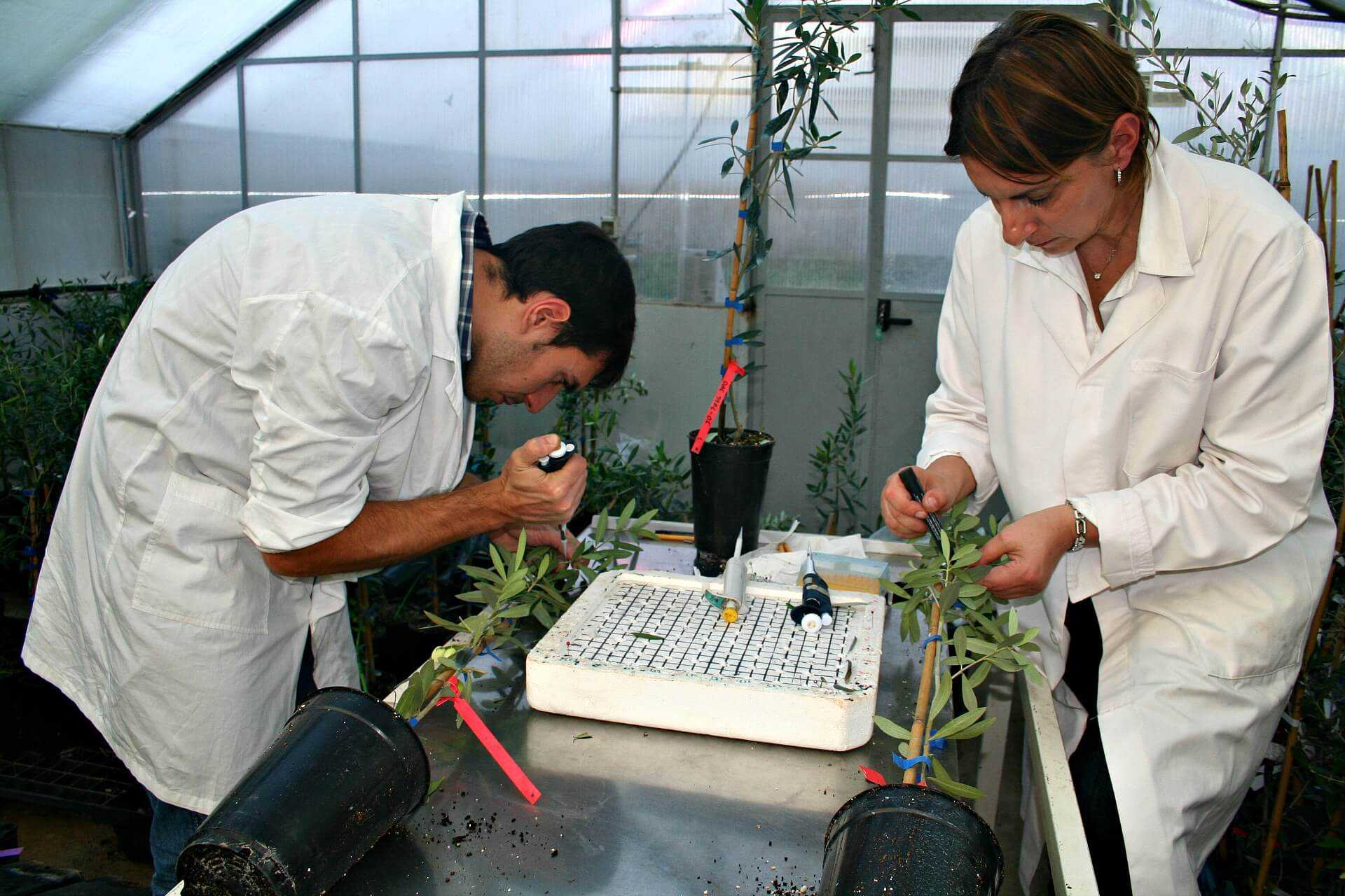 can-xylella-be-stopped