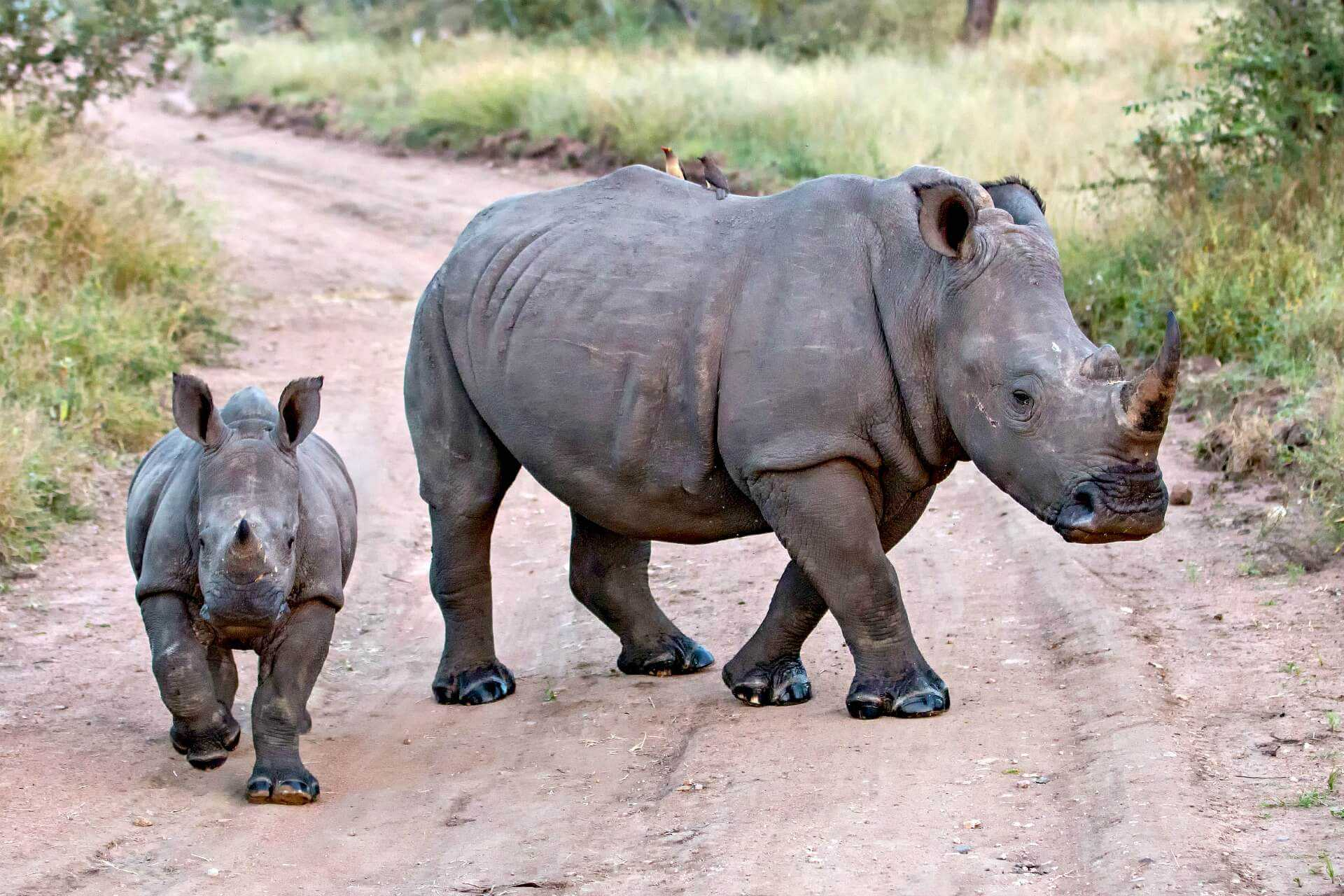 olive-farm-helps-save-rhinos