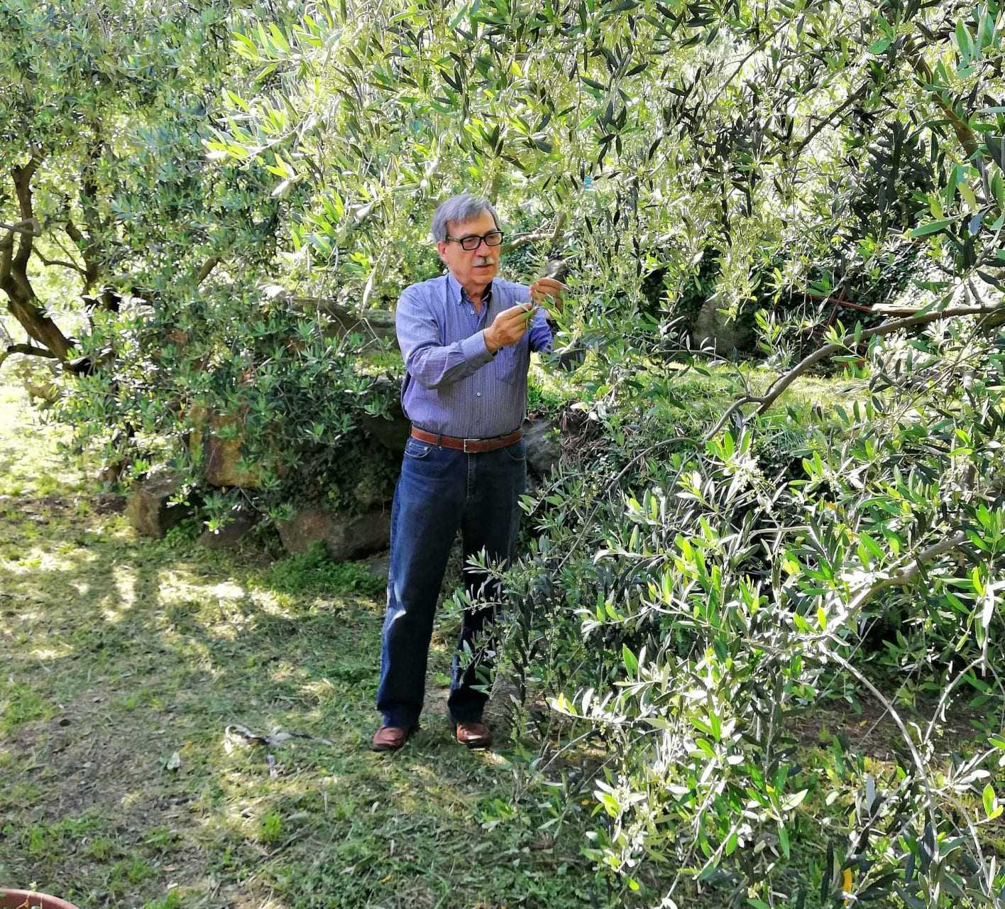 extreme-olive-growing-in-valle-daosta-and-piemonte