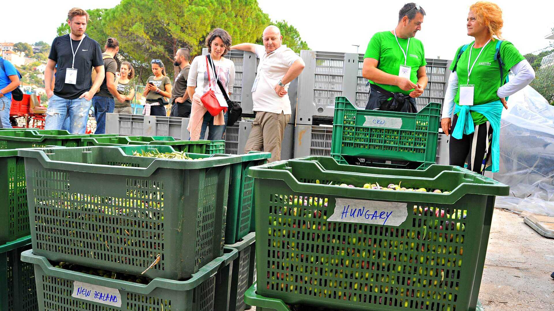 2nd-olive-picking-championship-set-for-october