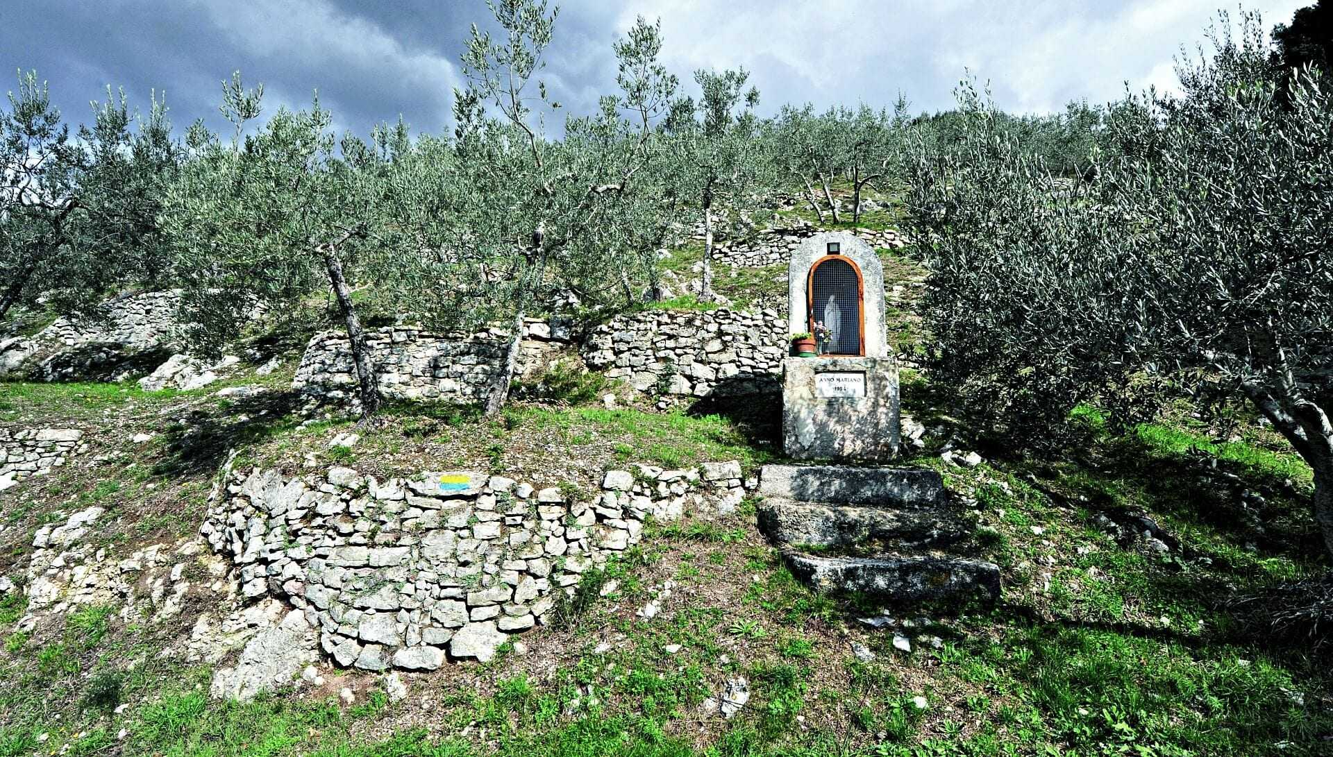 hillside-groves-between-assisi-and-spoleto-get-heritage-status