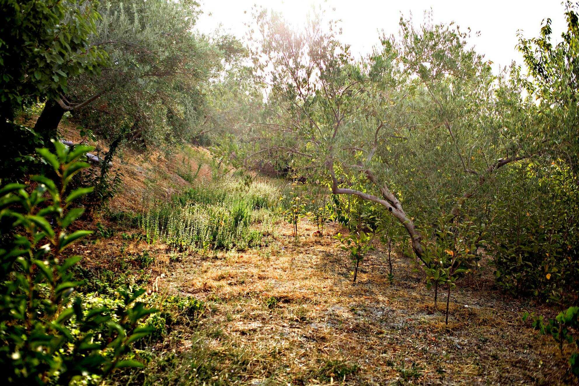 study-in-spain-confirms-olive-tree-as-strategic-crop-to-recover-biodiversity