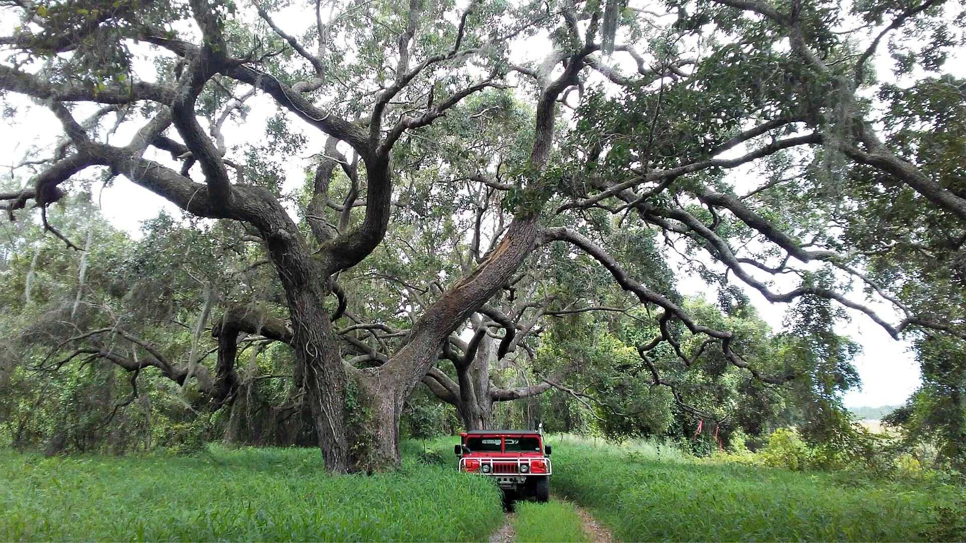 as-citrus-struggles-some-olive-growers-take-root-in-florida