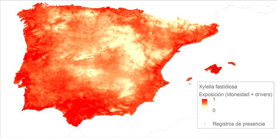 scientists-map-risk-of-exposure-to-xylella
