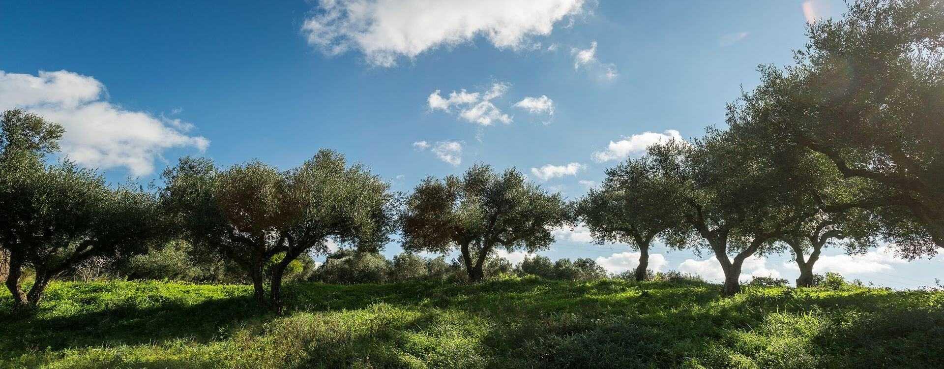 greeks-optimistic-about-upcoming-harvest