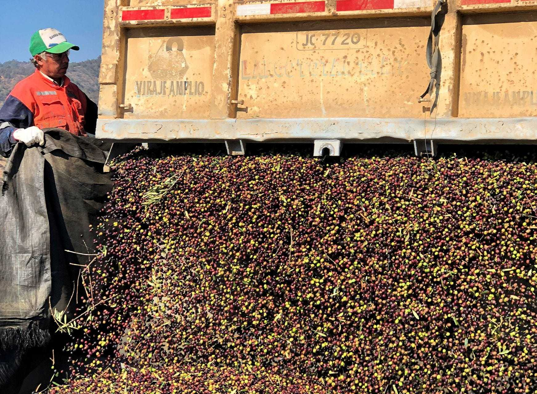 a-golden-start-to-the-harvest-in-chile