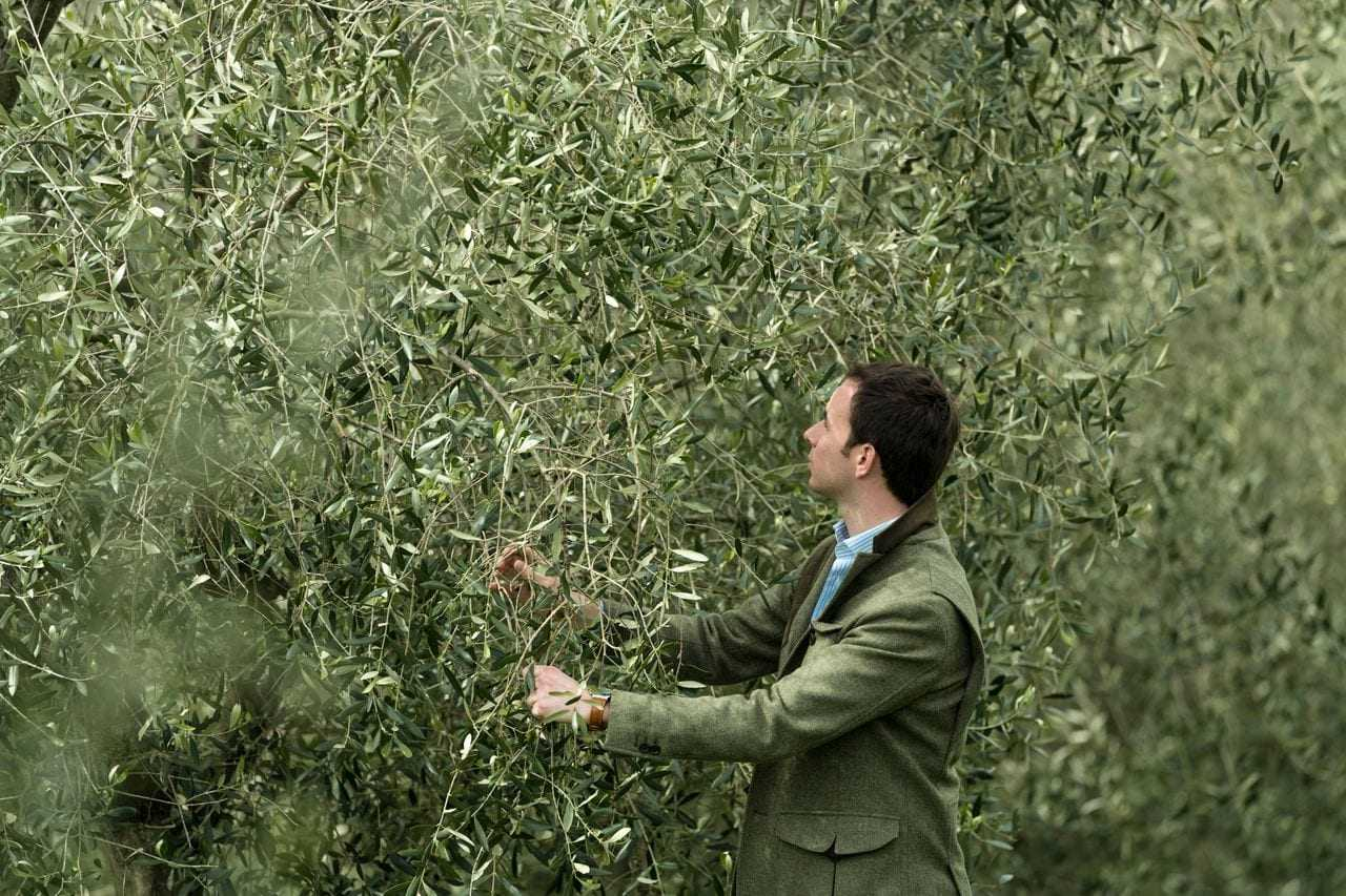 cet-importateur-d'huile-d'olive-sait-comment-trouver-des-gagnants-des-temps-d'huile-d'olive