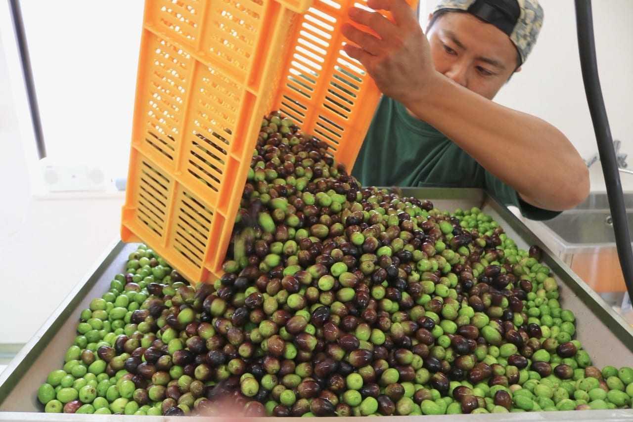 ocho-aceites-de-oliva-japoneses-entre-este-año-toprated-brands-olive-oil-times
