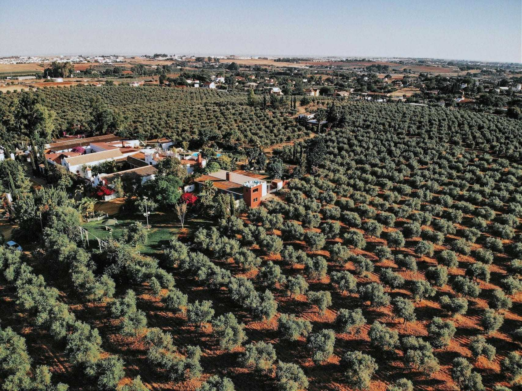climate-and-covid-worry-farmers-preparing-for-harvest-olive-oil-times