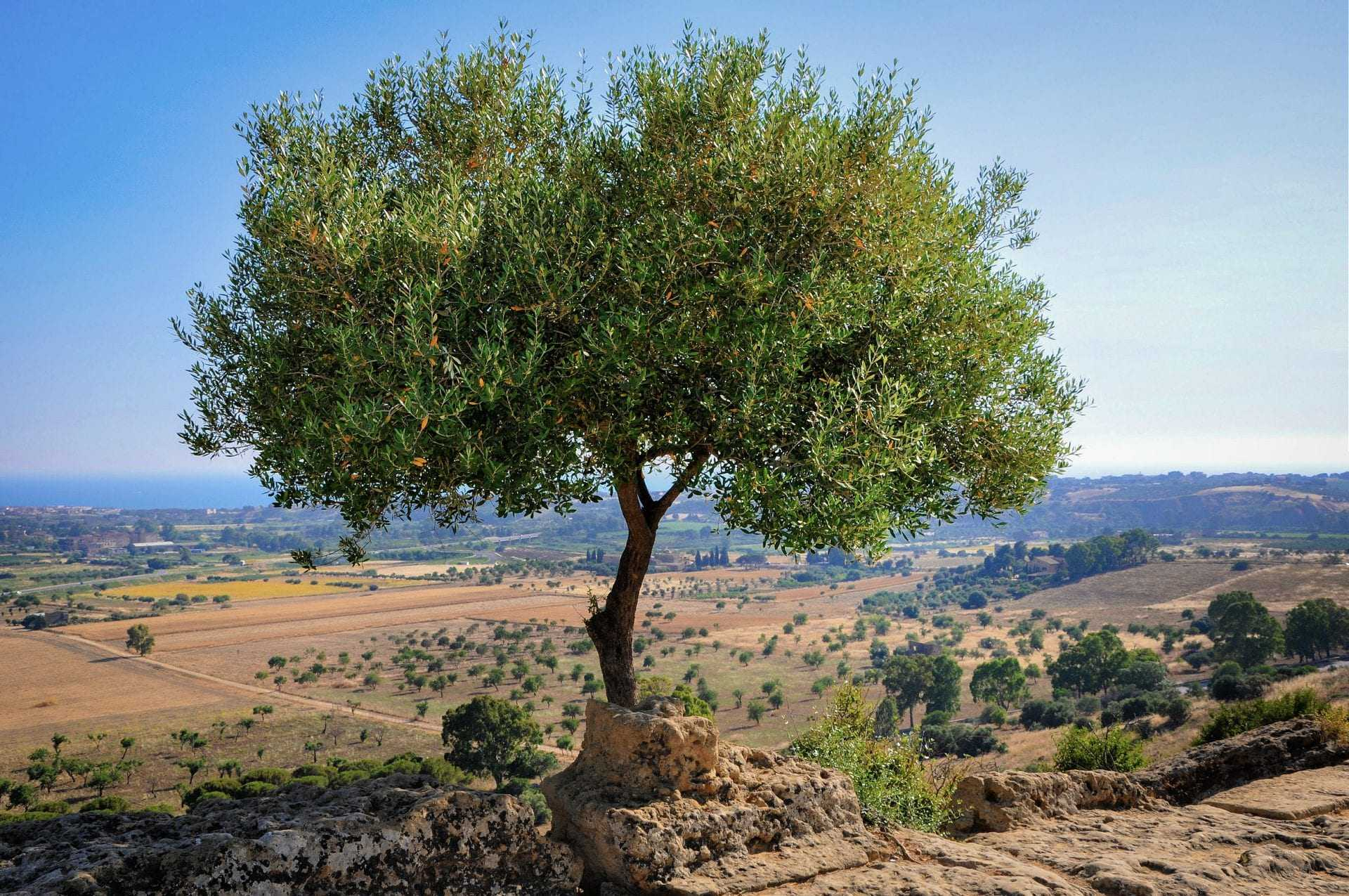 challenges-await-growers-as-mediterranean-basin-becomes-hotter-and-drier-olive-oil-times