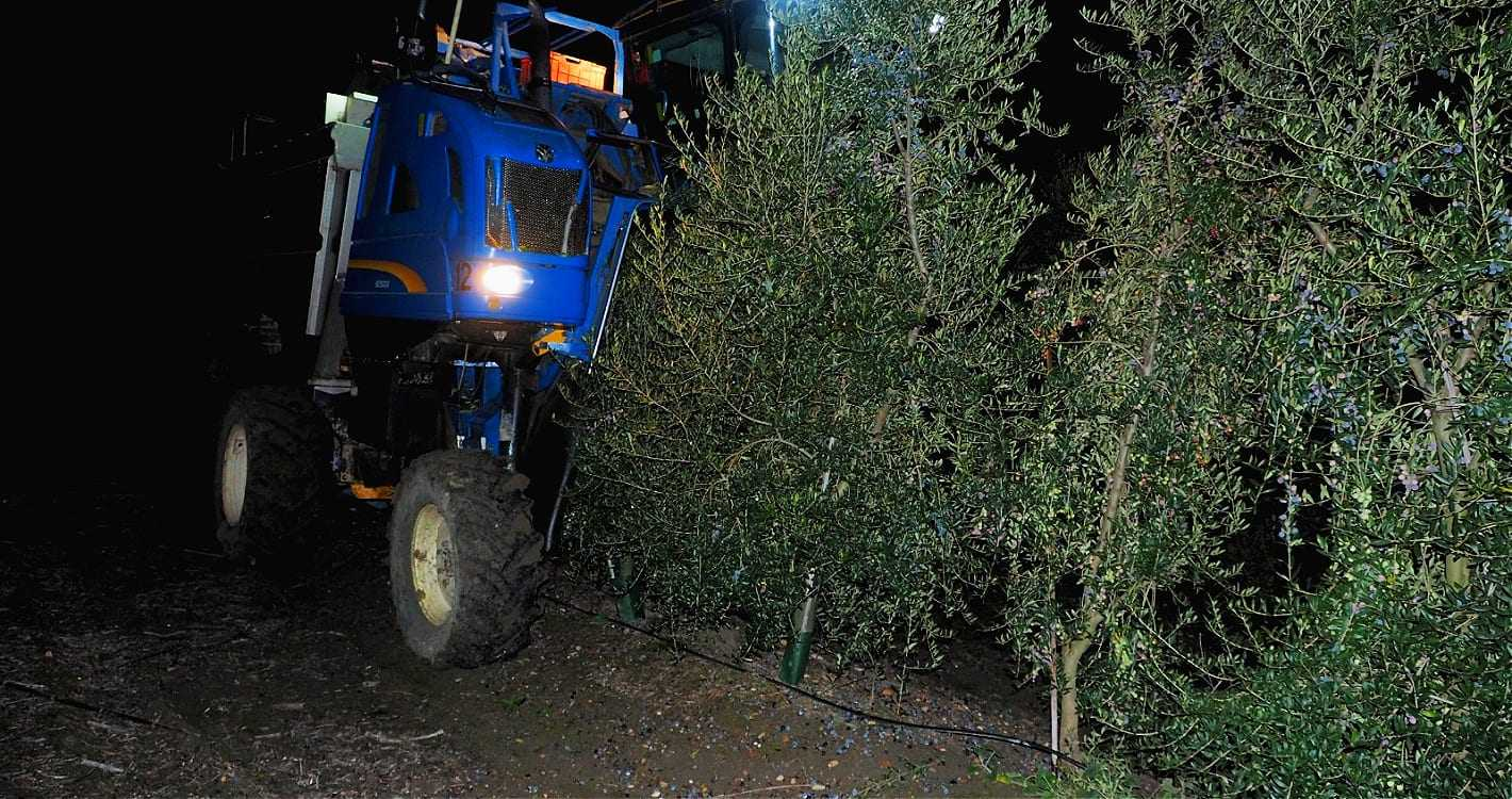 europe-briefs-world-bans-on-night-harvesting-have-alleviated-threat-to-migratory-birds-olive-oil-times